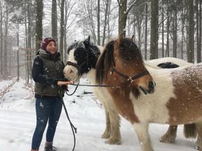 Wanderung mit Pferden