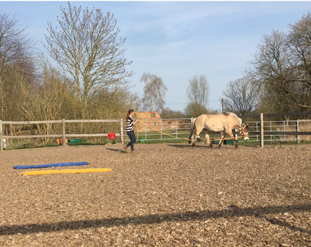 Longieren Pferd