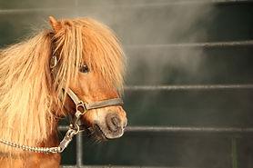 Solekammer Pferd Mecklenburg Vorpommern