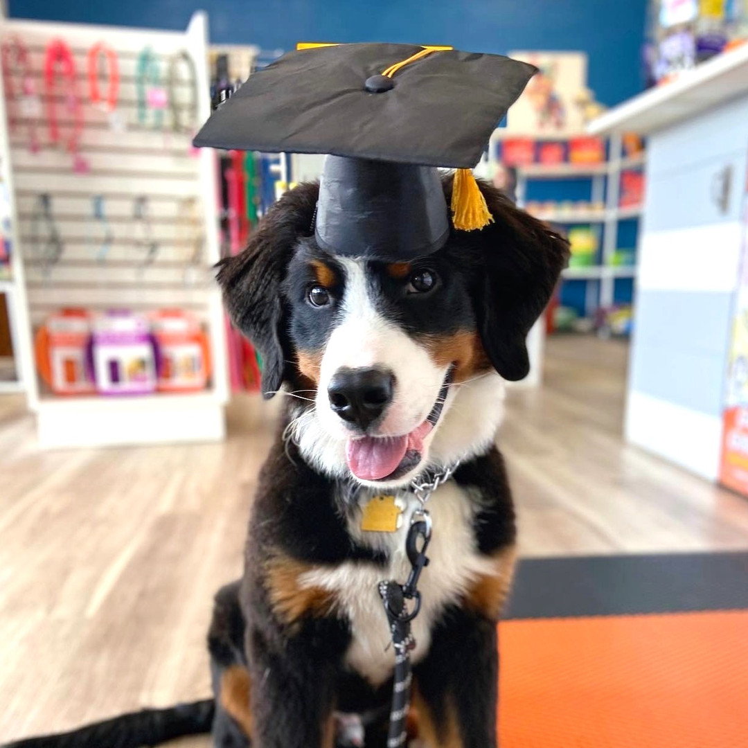 a dog graduating training in wilmington, nc