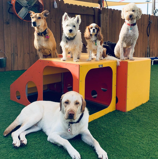 group of happy dogs at the dog play spot