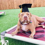 a dog training graduate at the dog play spot