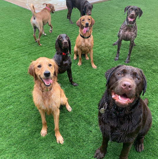 a group of friends at the dog play spot