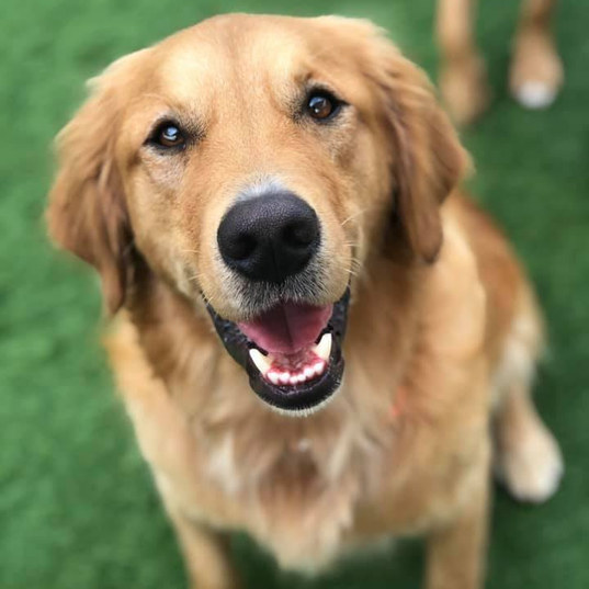 a smiling dog at the dog play spot