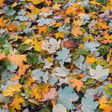 Autumn Floor