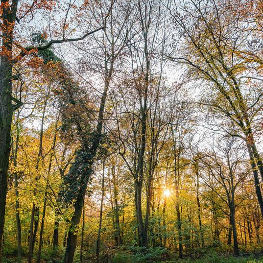 Autumn and sun