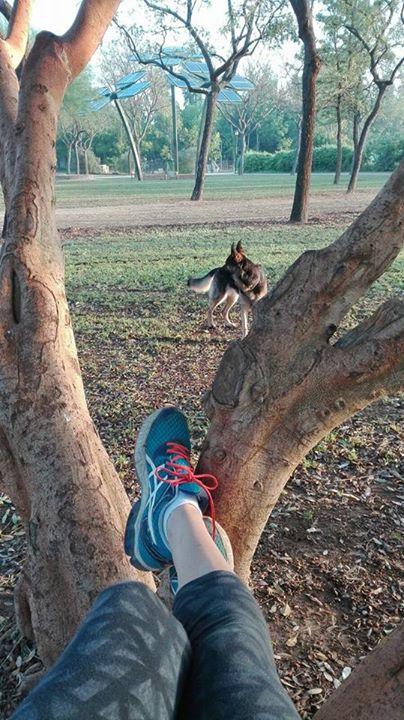 Mi árbol, mi perra y yo.