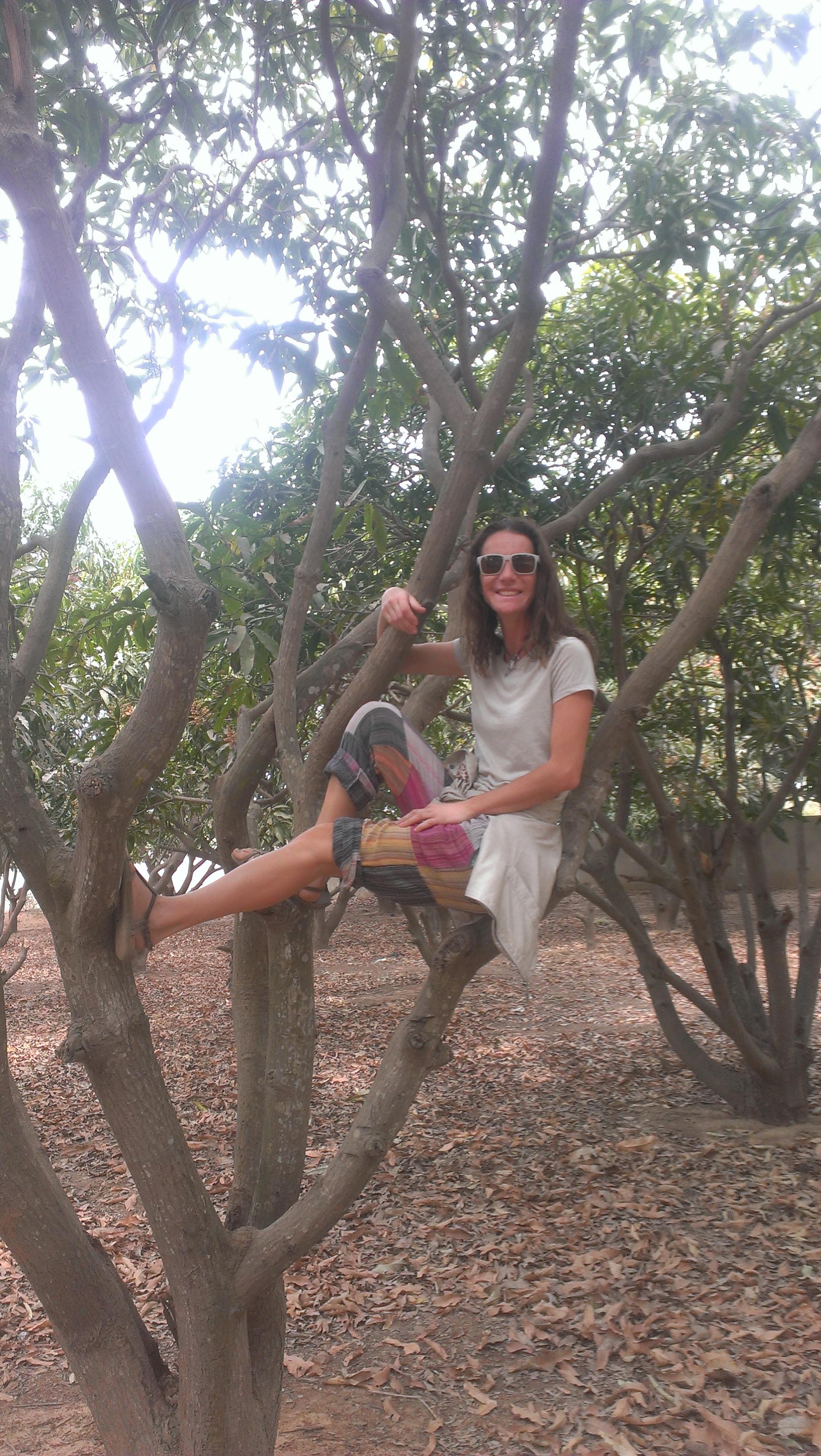 Por las ramas del Mango
