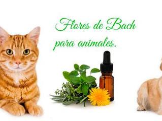 Otitis crónica canina, como tratarla naturalmente con Flores de Bach.