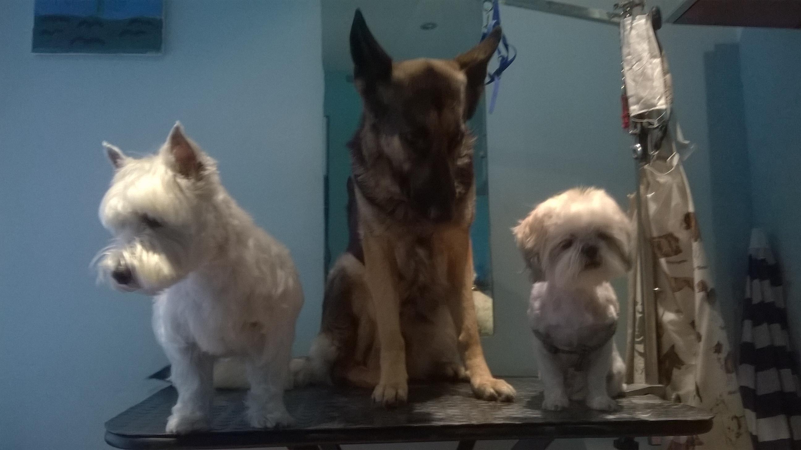 Annie, Flamenka y Lua