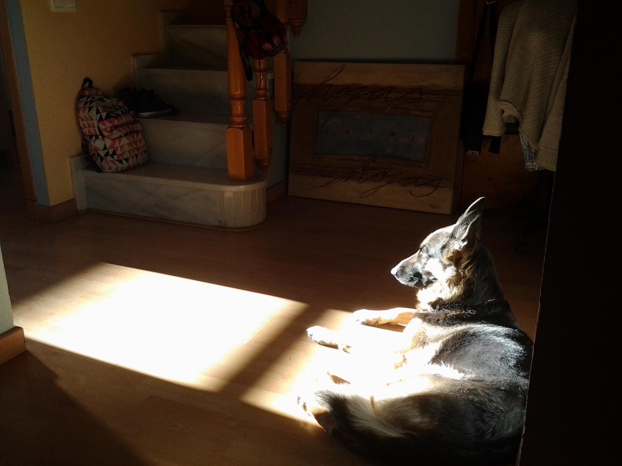 Flamenka en meditación