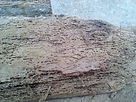 timber decay & infestation