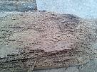 woodworminfestation.jpg