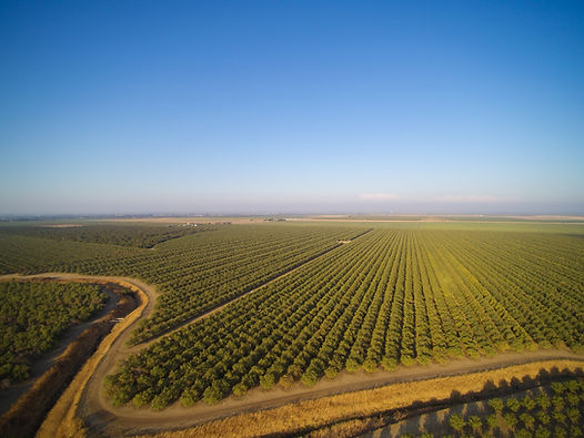 Beautiful aerial view of large almond or