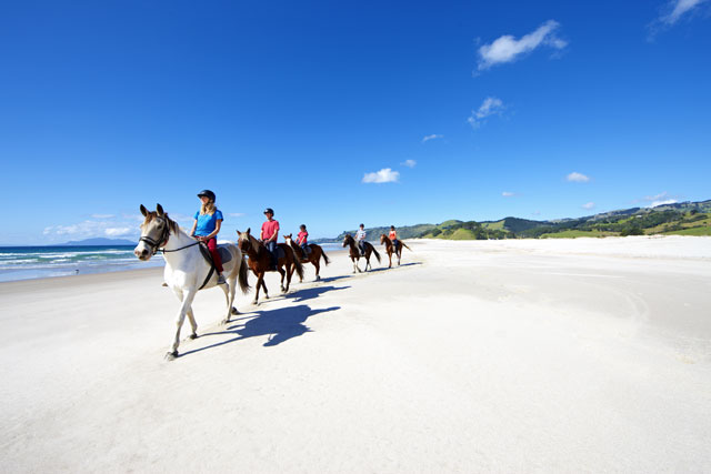 Pakiri Beach Horse Rides_65084.jpg