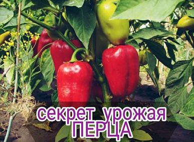 Секрет от Татьяны Грушевой