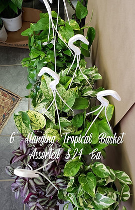 """Hanging Tropical Basket As. 6"""""""