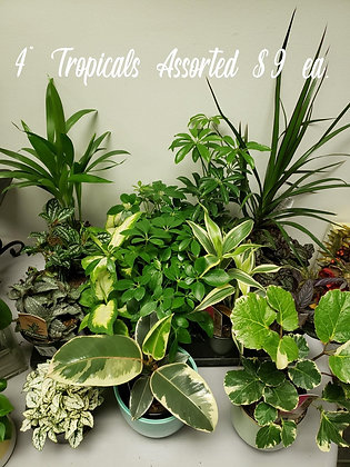 """Tropical Plants Assorted 4"""""""