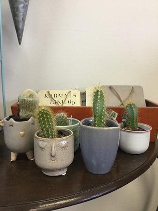 """Cactus Assorted 2"""""""