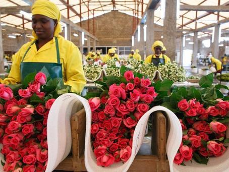Flowers of Human Destruction