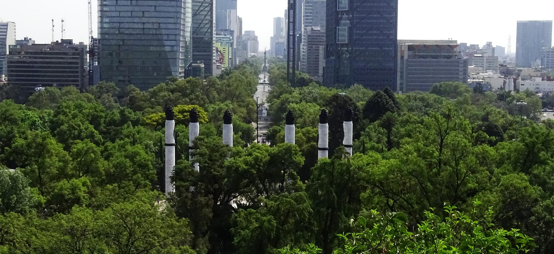 Decálogo para la arborización urbana