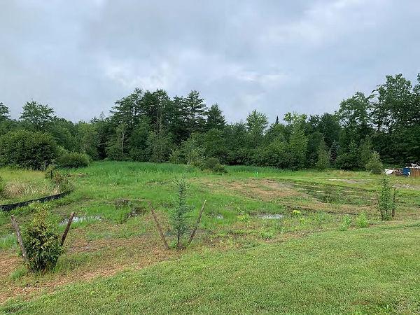 LGE Wetlands Restoration.jpg