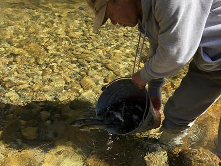 アマゴ放流、ゴミ拾い、釣りキャン