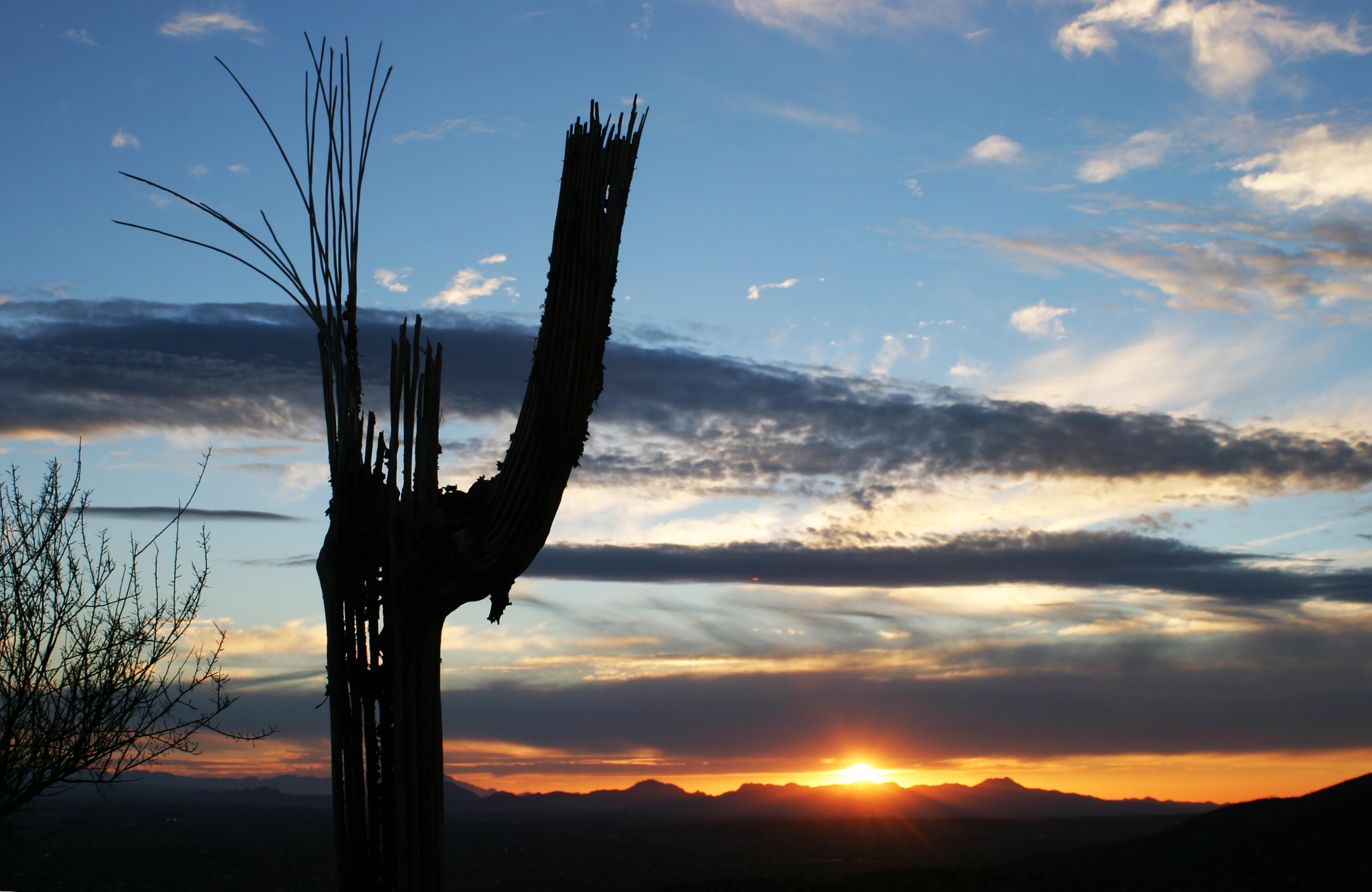 Cactus Mount Lemmon