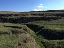 ranch grass