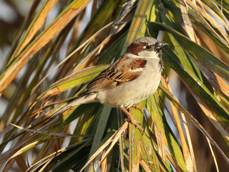 If God Cares for the Sparrows, He certainly Cares for You