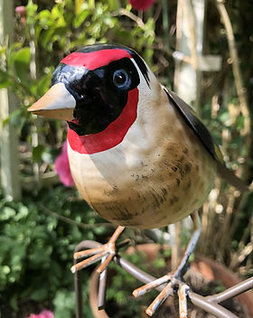 goldfinch 3.jpg