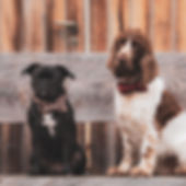 Dogs_Quadrat.jpg