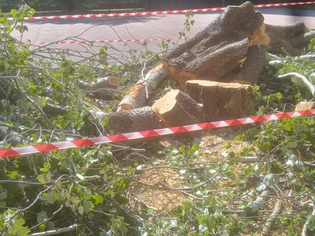 Abbattimento albero al campo da basket