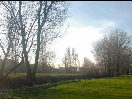 Il Comune valuterà il posizionamento di aiuole nel prato a raso di parco Cantoni