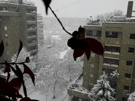 La bellezza della neve nel quartiere
