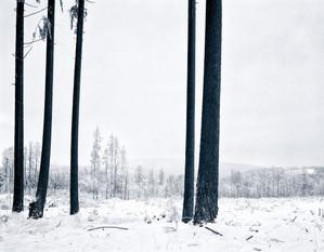 Upright_Rokk_Eckart-Bartnik_07.jpg