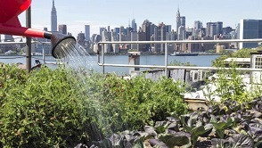 """На 28 април 2020 г. организираме международна научна конференция на тема """"Градското земеделие к"""