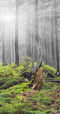 Wald Moos klein.jpg
