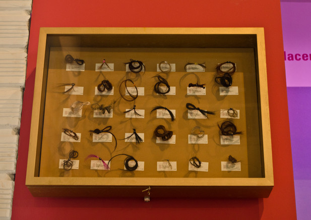 speciation boxes with hair samples of differences between the same species
