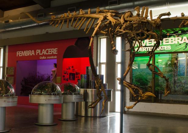 Natural sciences gallery at Museum of Antioquia