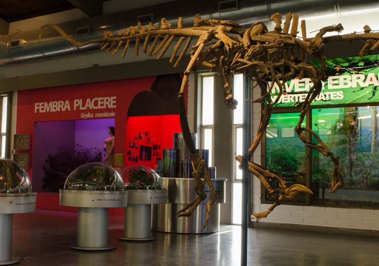 General view of the installation in context with the Natural Sciences room