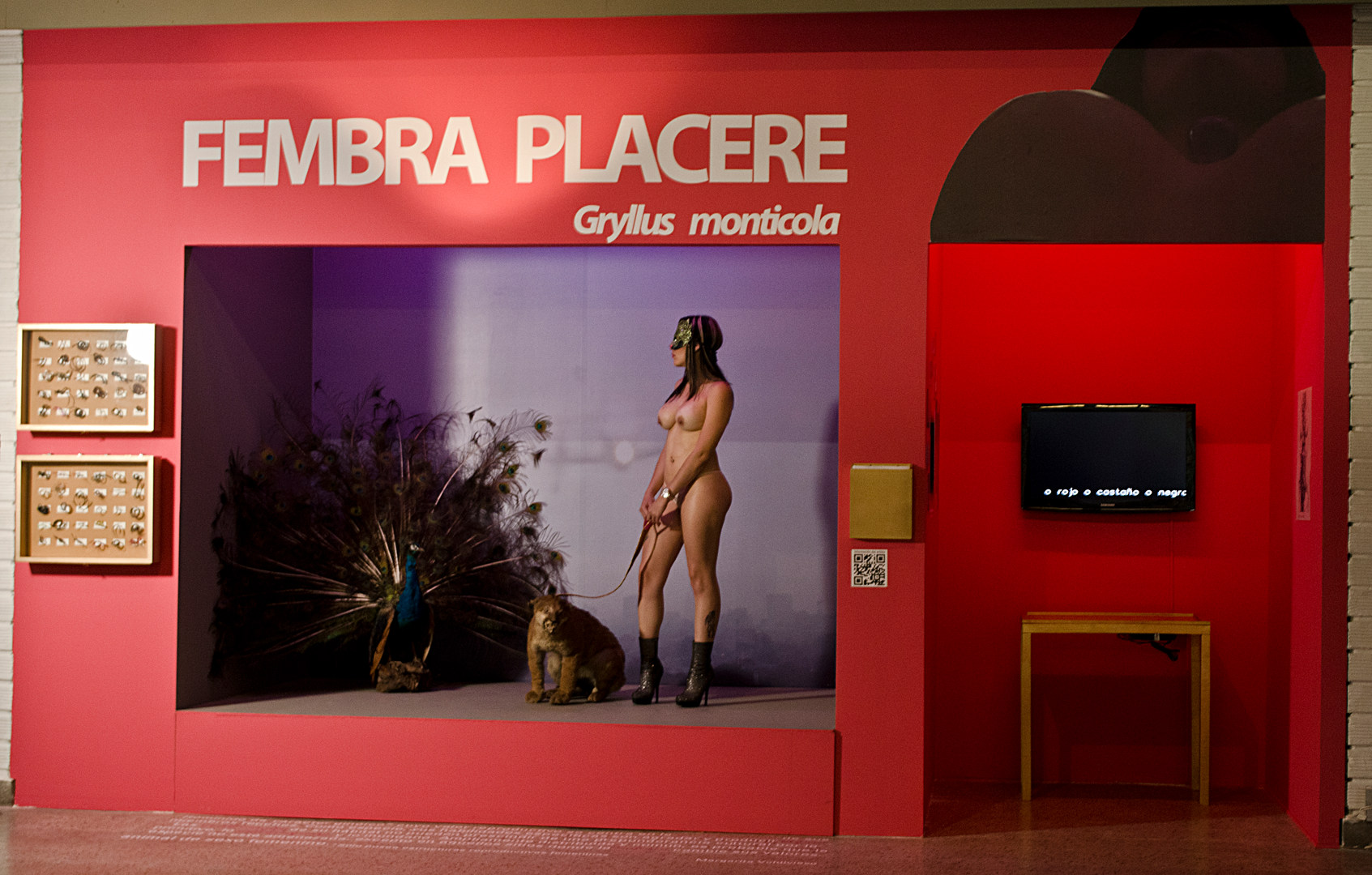 Performance at the opening night of Fembra Placere