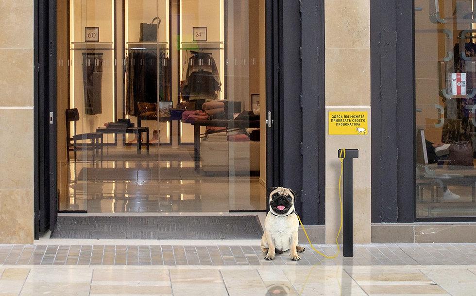 Pug enter shop 2-min.jpg