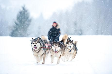 dog sled.jpg