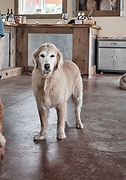 THREE DOG WINERY LIFE_0107 - Edited.jpg