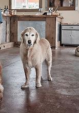 THREE DOG WINERY LIFE_0107 - Edited.jpg