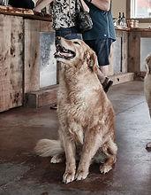 THREE DOG WINERY LIFE_0107 - Edited (1).