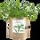 Thumbnail: Garden in a bag