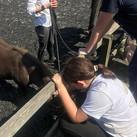 Mia Rodley's demo; meeting her shetland Alfie