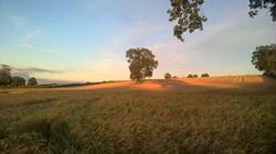 Herefordshire (1)